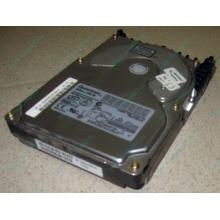 Жесткий диск 18.4Gb Quantum Atlas 10K III U160 SCSI (Электрогорск)